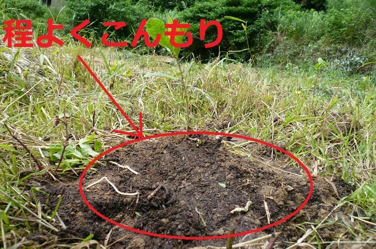クヌギの地植え