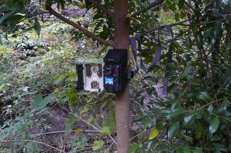 トレイルカメラ設置