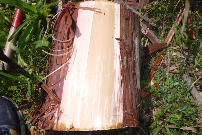 針葉樹の皮むき